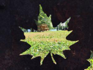 Water view through leaf